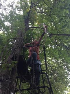 Shooting 3D targets from a tree stand.